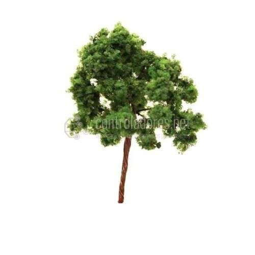 Árbol verde pequeño