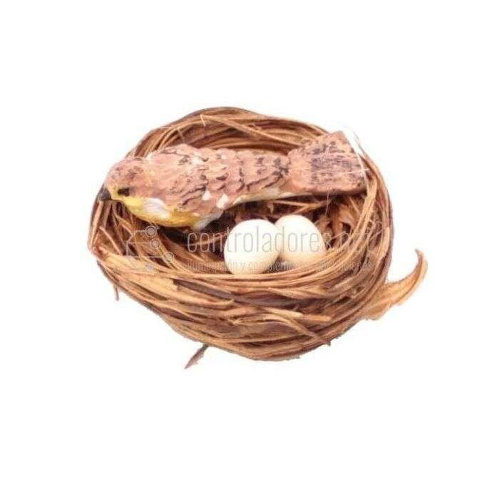 Nido con pájaro pequeño y dos huevos
