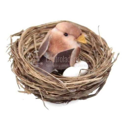Nido con pájaro de colores