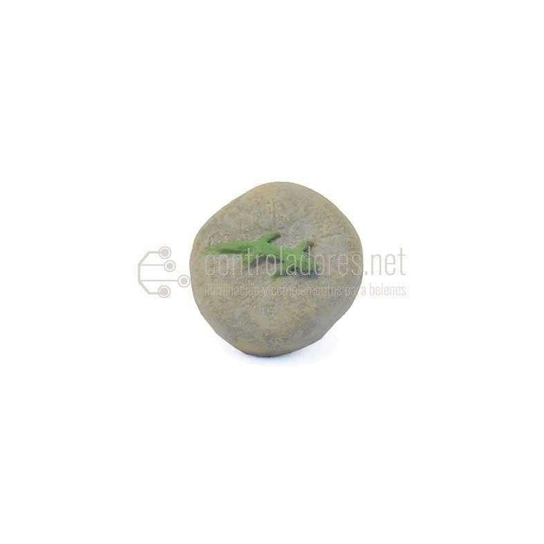Lagartija en piedra pequeña