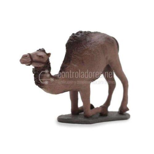 Camello sentándose sin carga