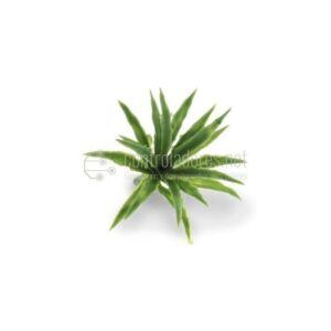 Foglia allungata pianta verde