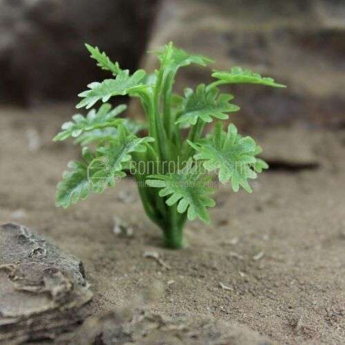 Pianta verde foglia ricci