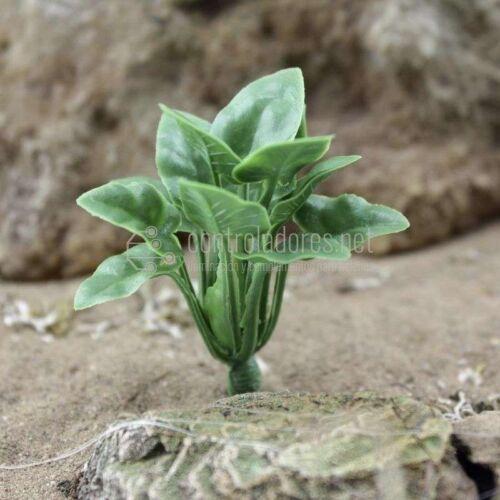 Foglia liscia della pianta verde